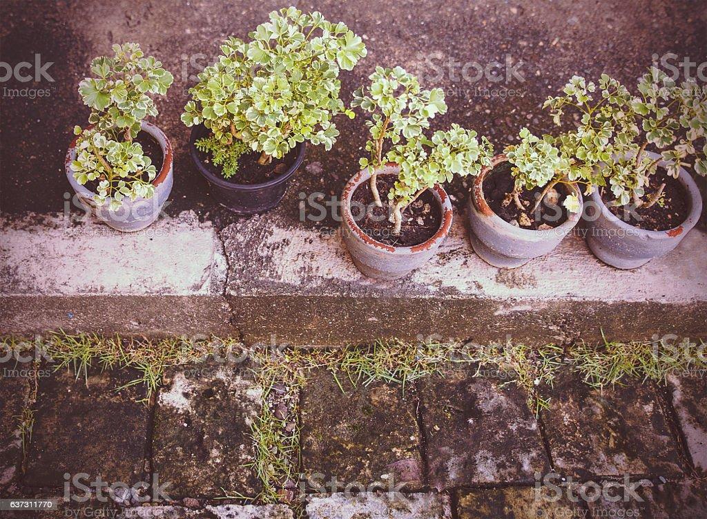 pots in row on the paviment floor stock photo
