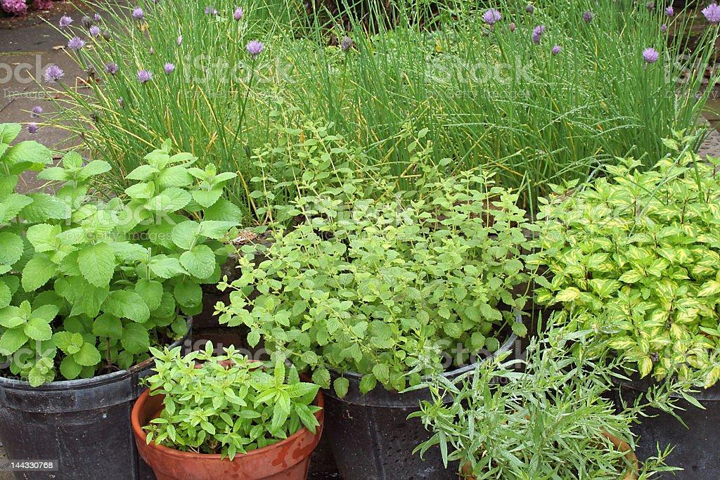 pots of herbs royalty-free stock photo