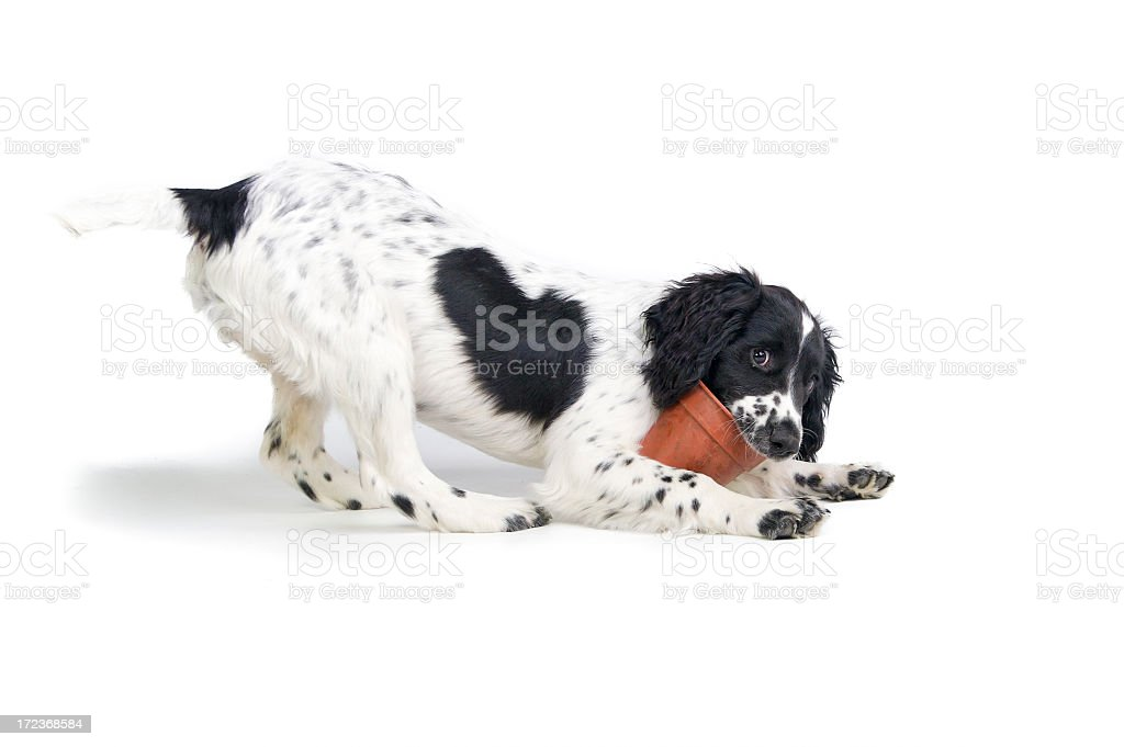 Pots of puppy fun! royalty-free stock photo