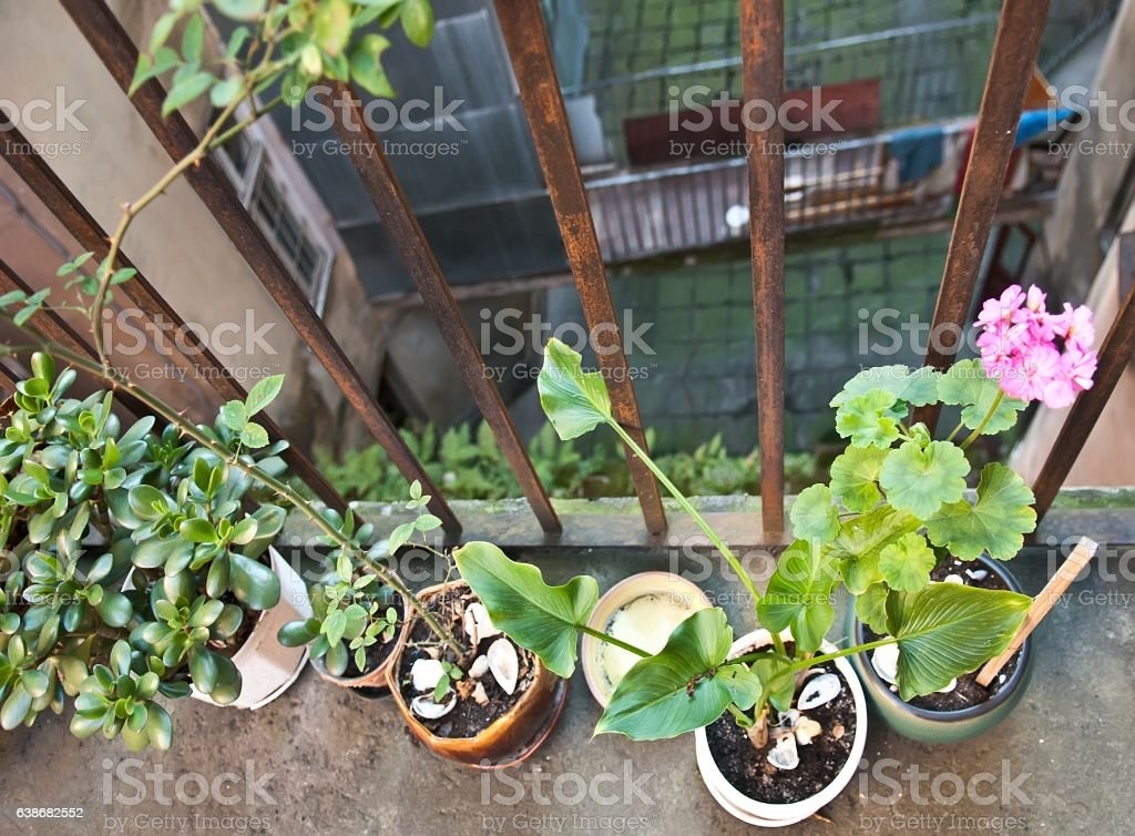 Pots with plants stock photo