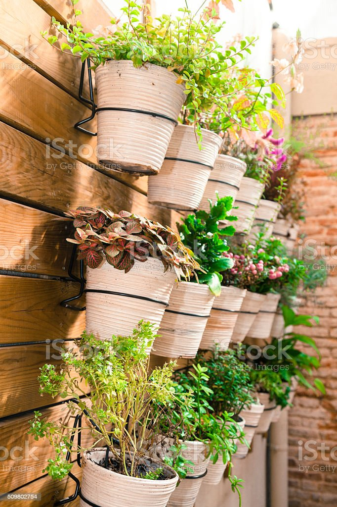 Pots with plants rack stock photo