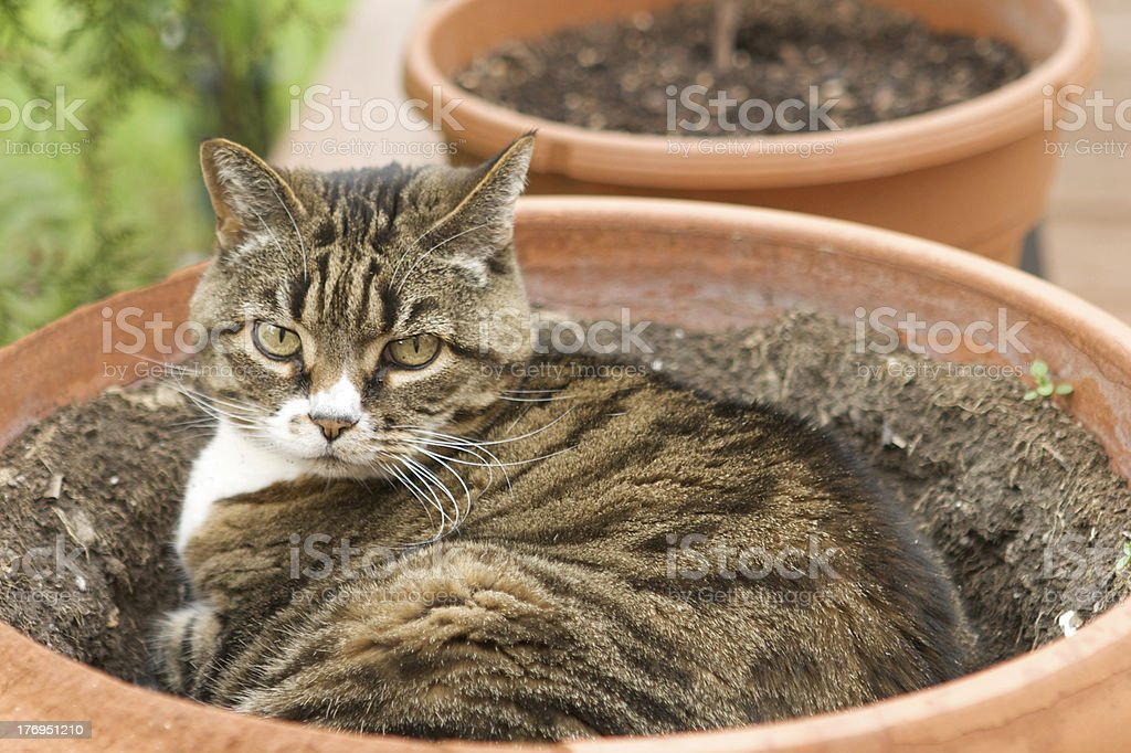 Potted Cat stock photo