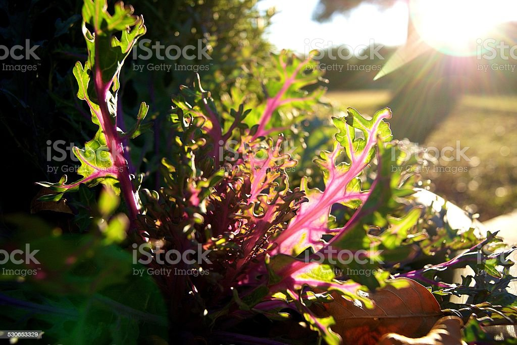 Potted Color royalty-free stock photo