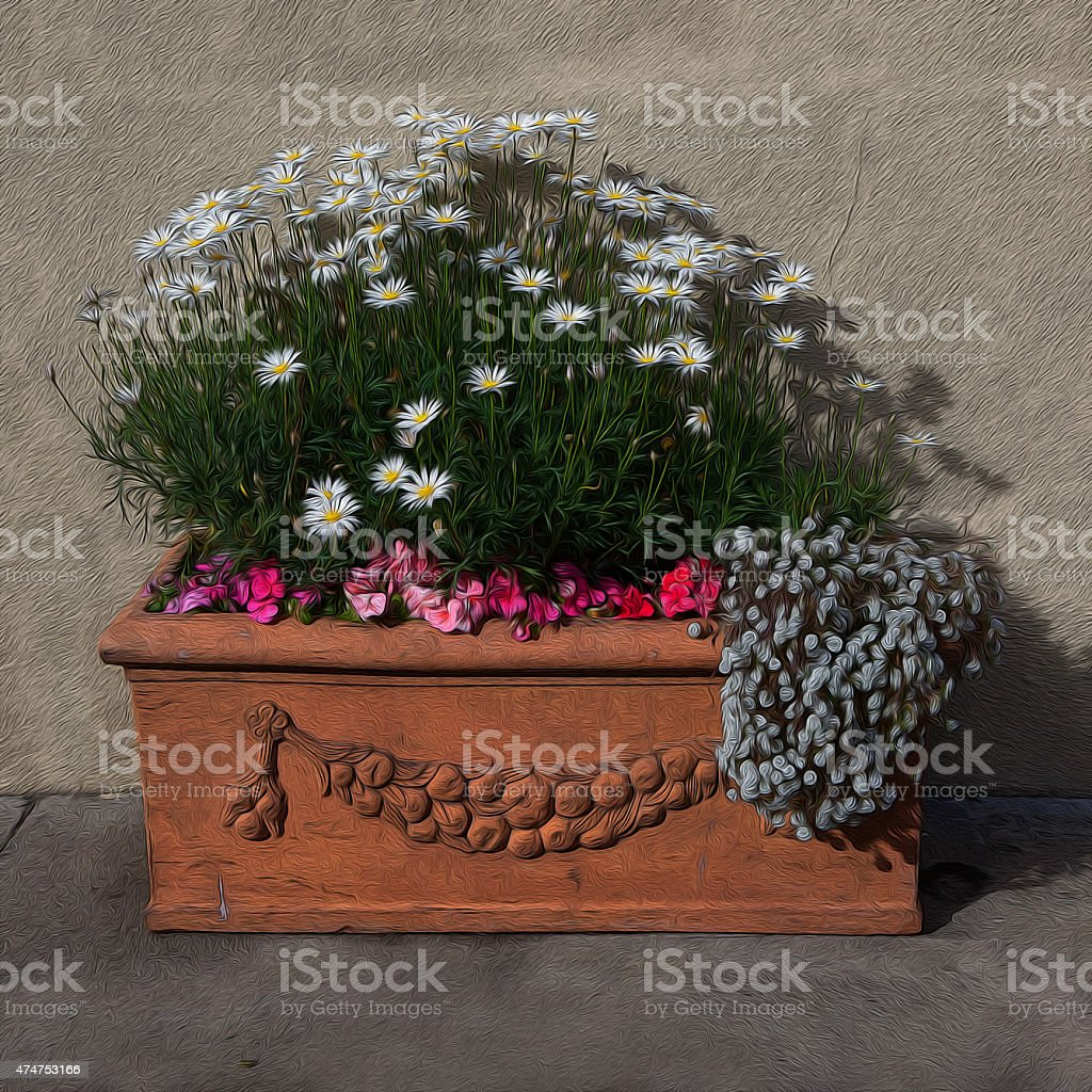 Potted Daisies stock photo