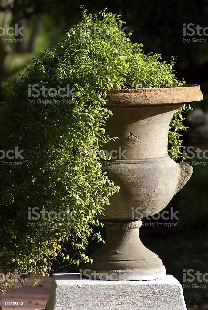 Potted Flower royalty-free stock photo