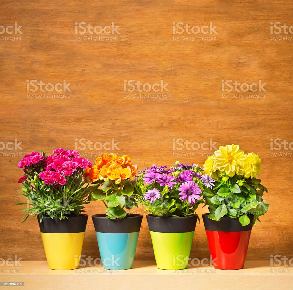 Potted Flower Seedling Plants in Blank Background for Copy stock photo