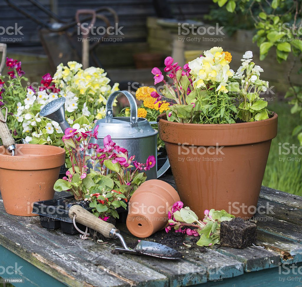 Potted flowers, watering can, tools on wood table stock photo