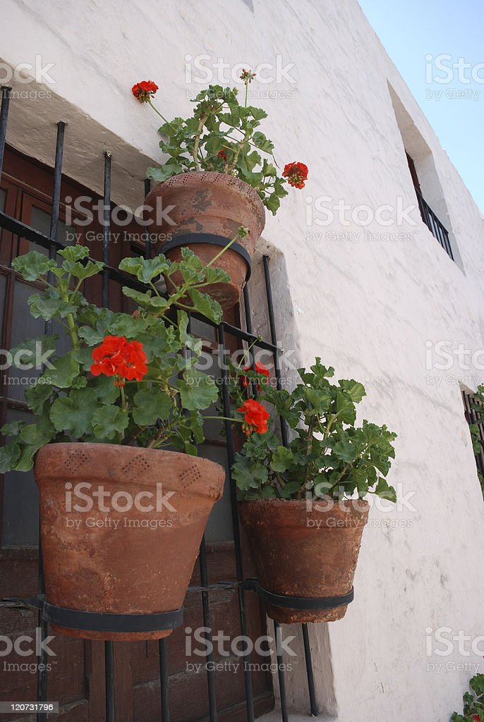 Potted Geraniums royalty-free stock photo