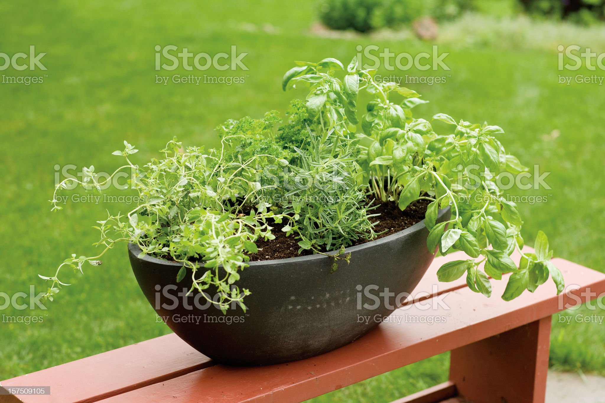 Potted Herb Garden royalty-free stock photo