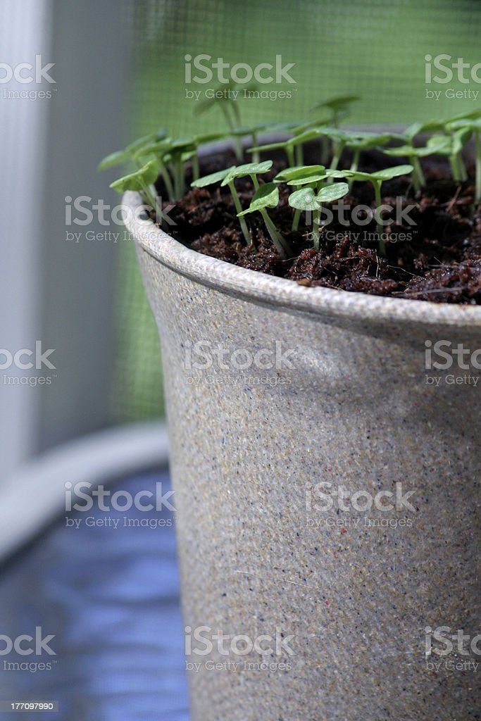 Potted Herbs stock photo
