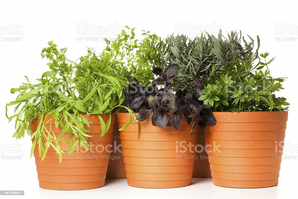 Potted kitchen herbs royalty-free stock photo