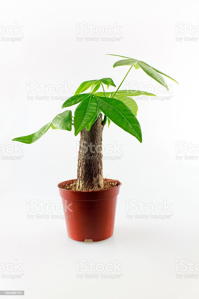 potted stock photo