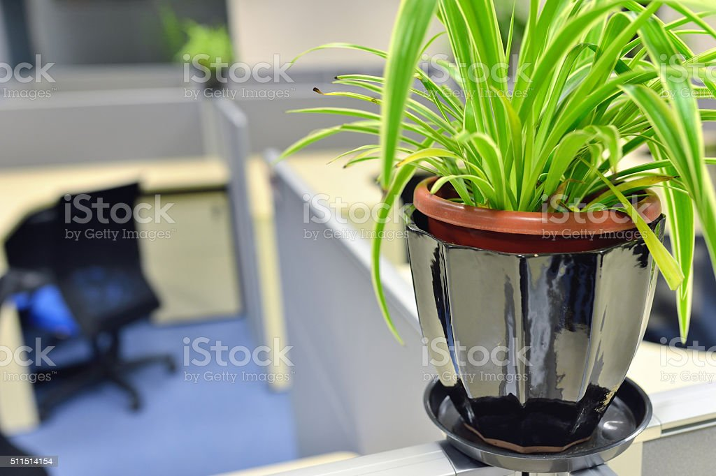 Potted plant in the office cubicles stock photo