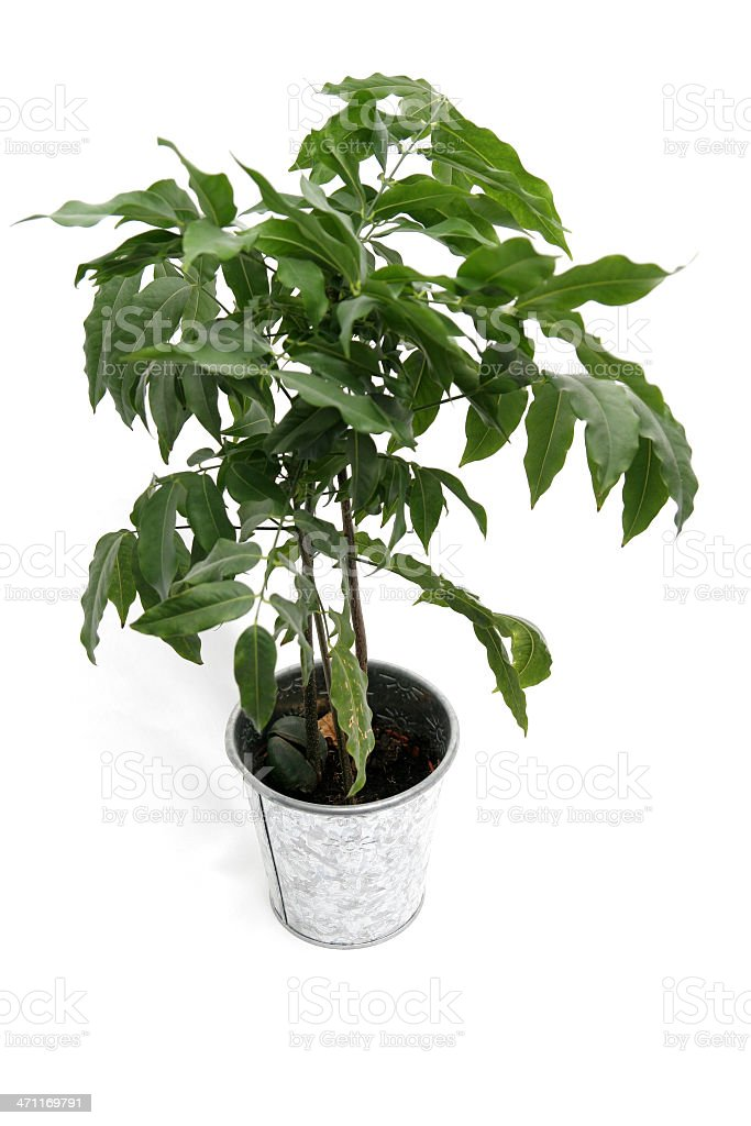 Potted plant on white stock photo