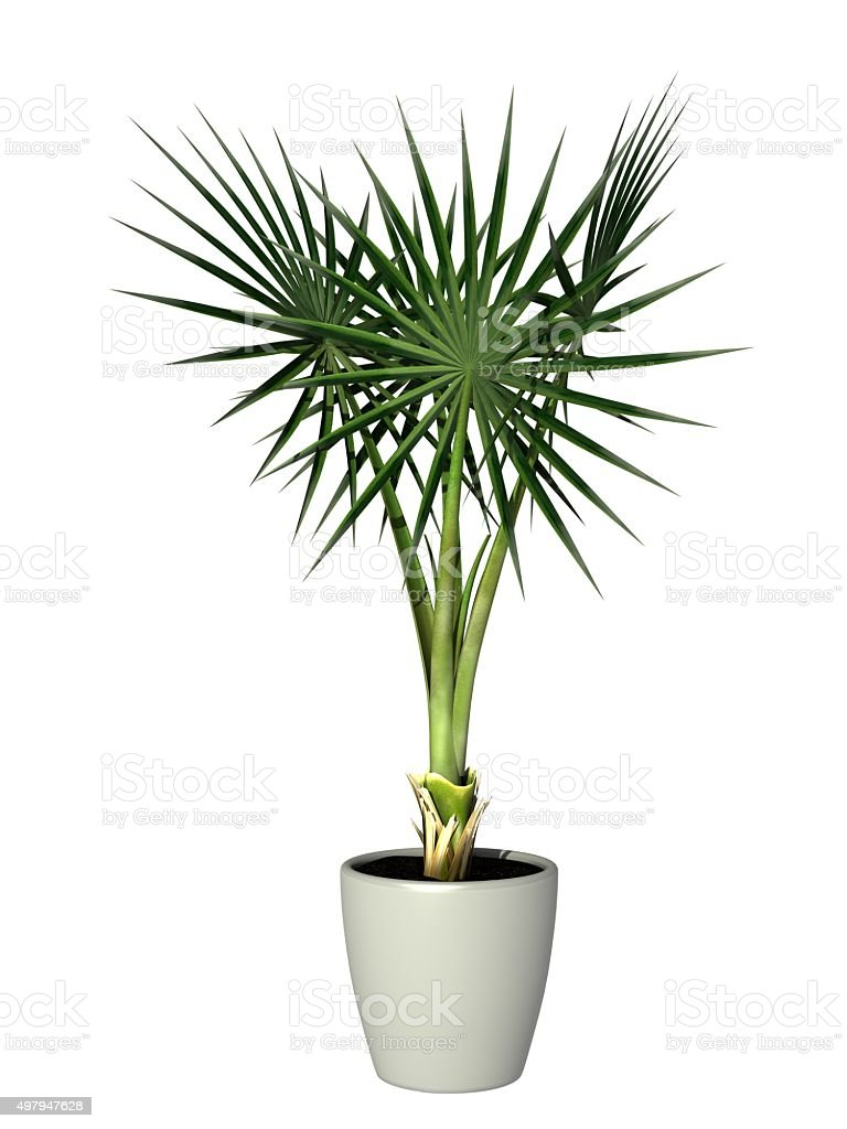 potted plant stock photo