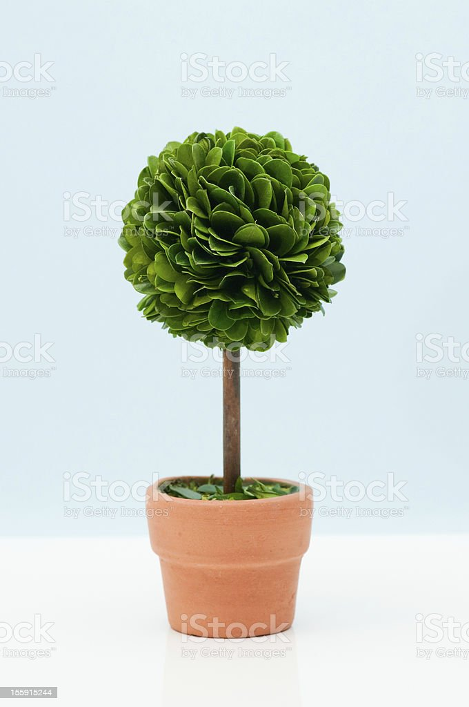 Potted plant standing against blue wall royalty-free stock photo