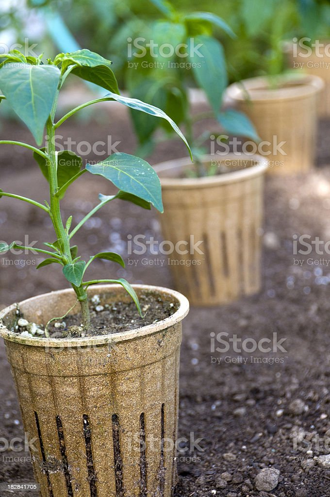 Potted Plants in Garden stock photo