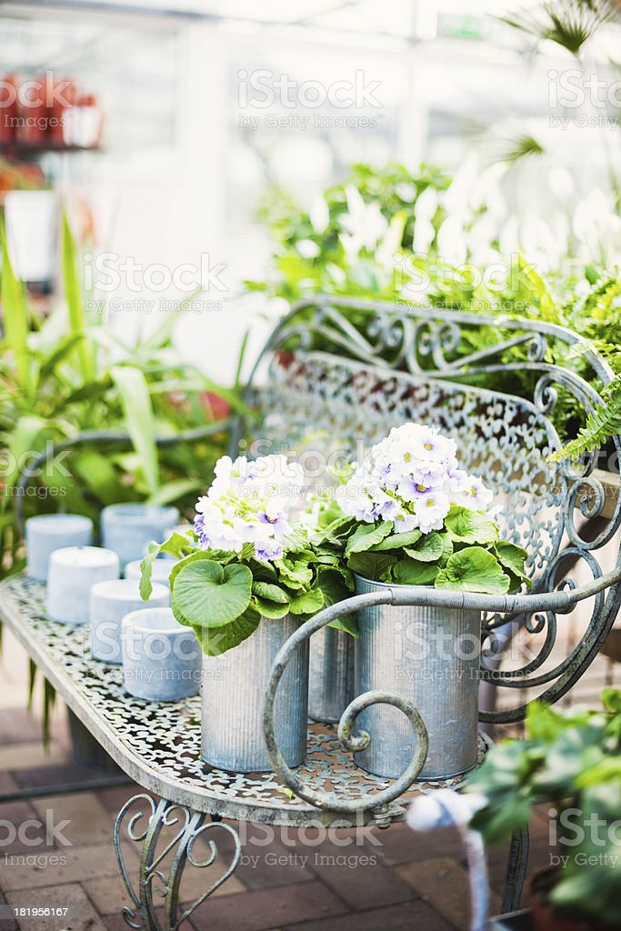 Potted plants in garden shop royalty-free stock photo