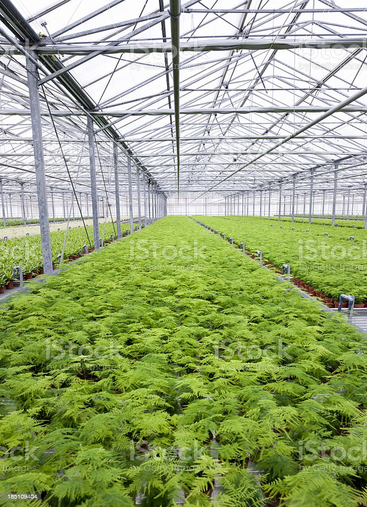 potted plants in greenhouse stock photo