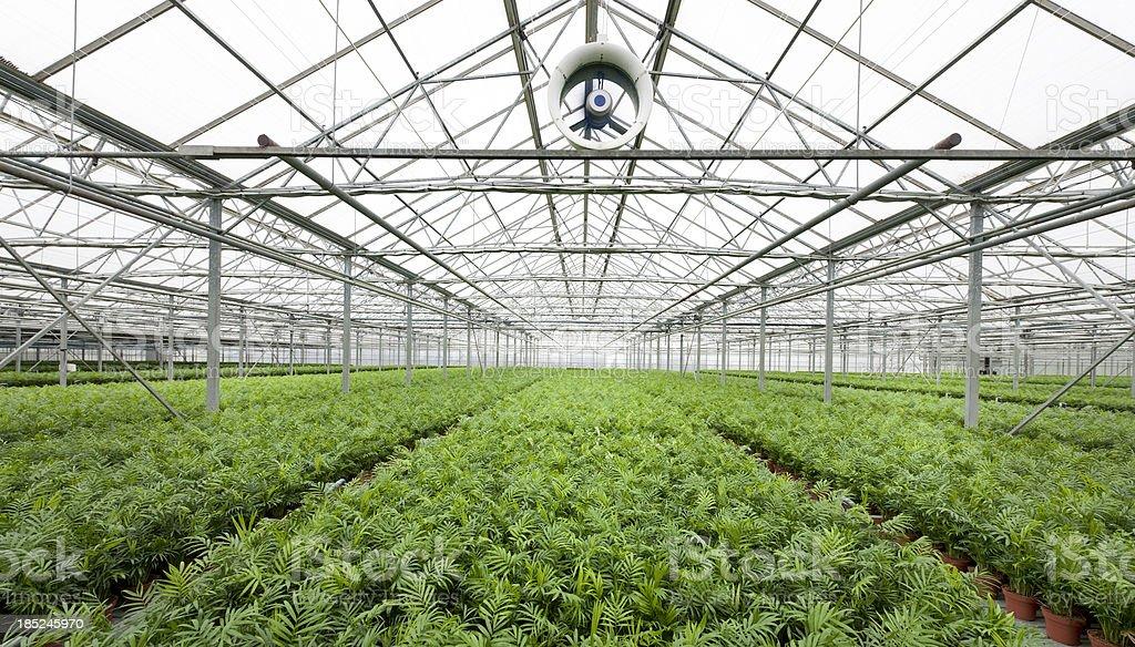 schöne pflanzen im gewächshaus stockfoto 185245970 | istock, Terrassen ideen