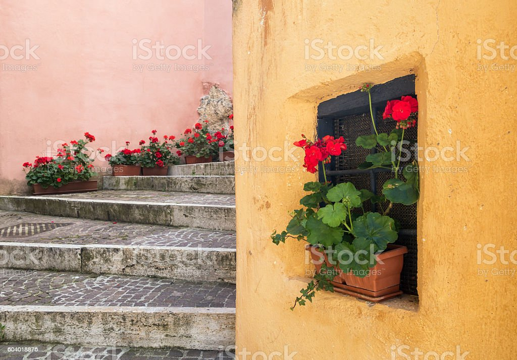 Potted plants on a staircase, Lazio Italy stock photo