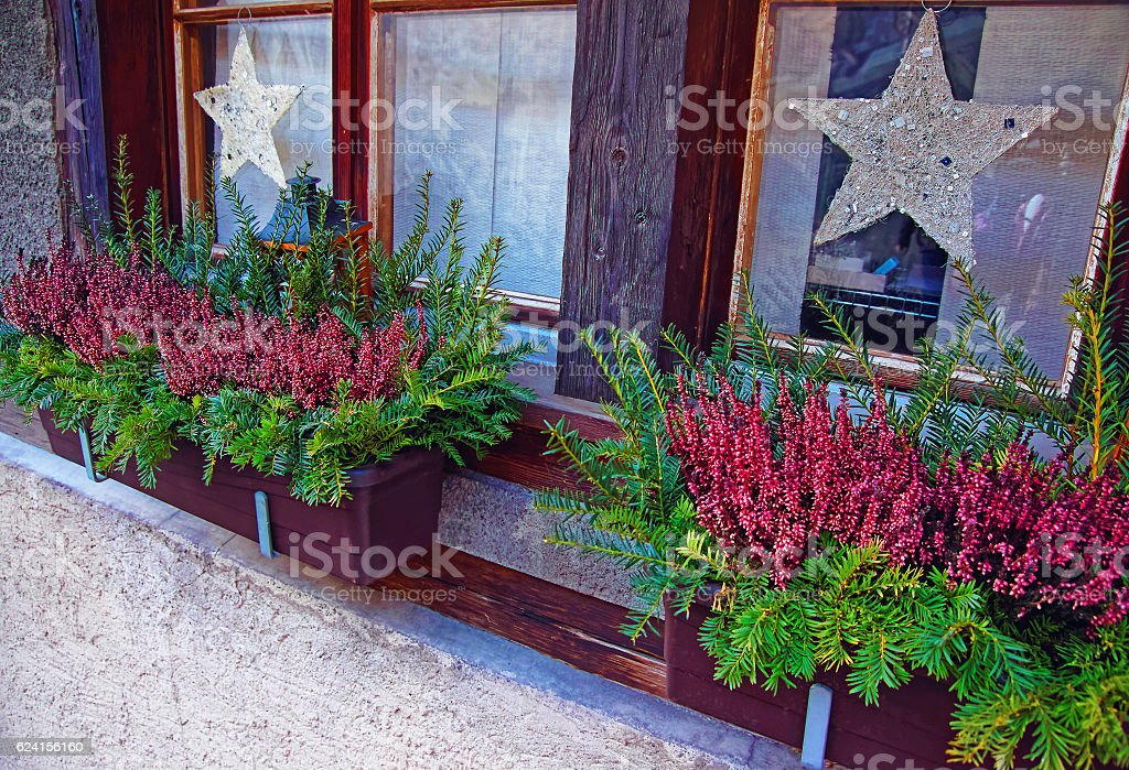 Potted plants on window with Christmas decoration stock photo