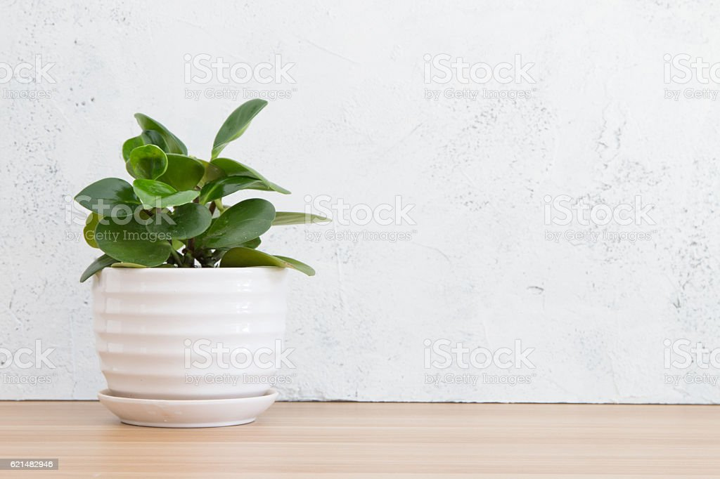 Potted plants on wooden desk stock photo