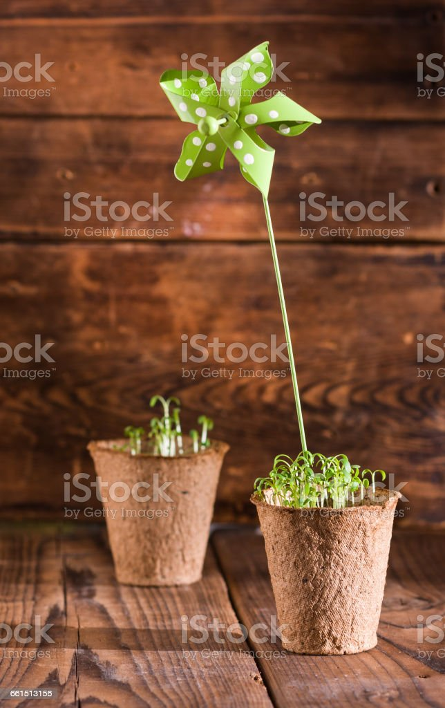 Potted seedlings growing in metal pot and garden tools stock photo