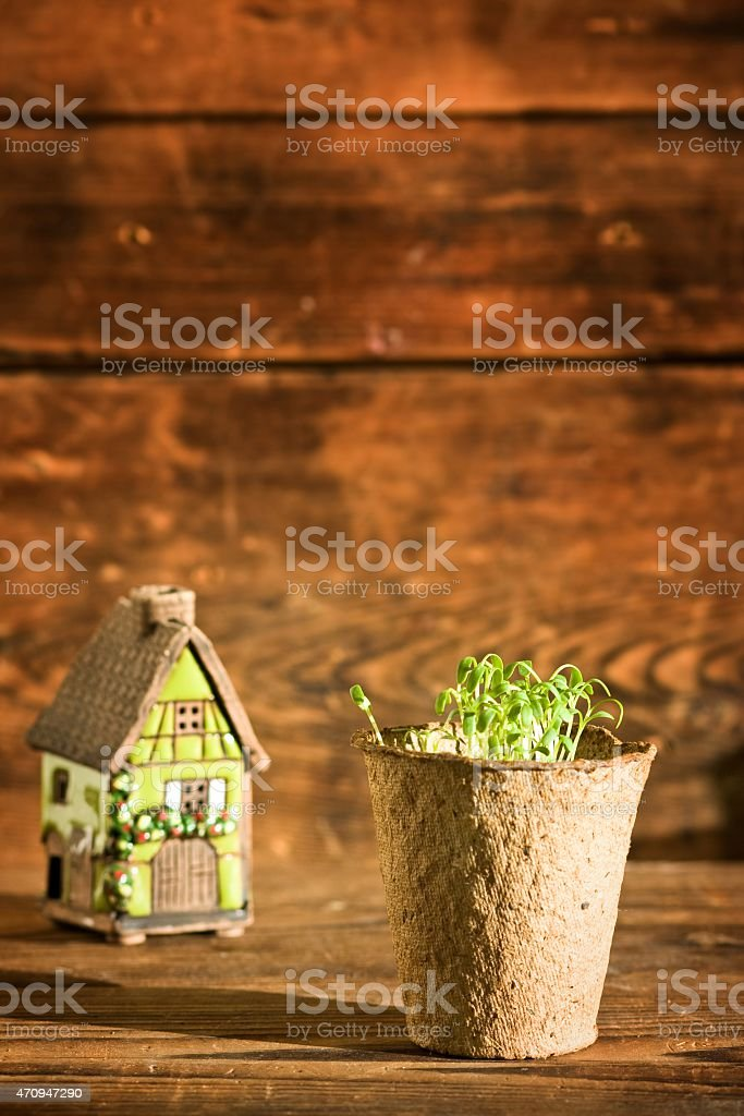 Potted seedlings growing in peat moss pot and ceramic house stock photo