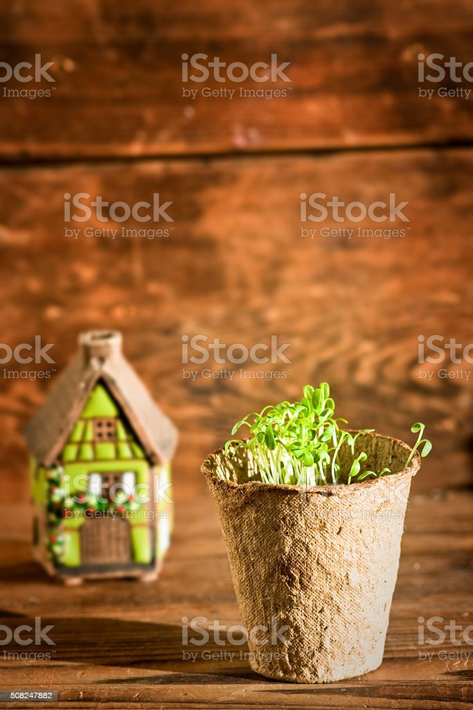 Potted seedlings in biodegradable  pot and ceramic house stock photo