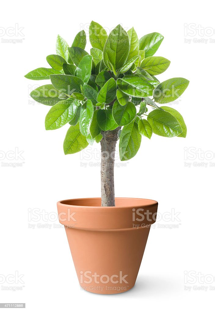 Potted tree stock photo