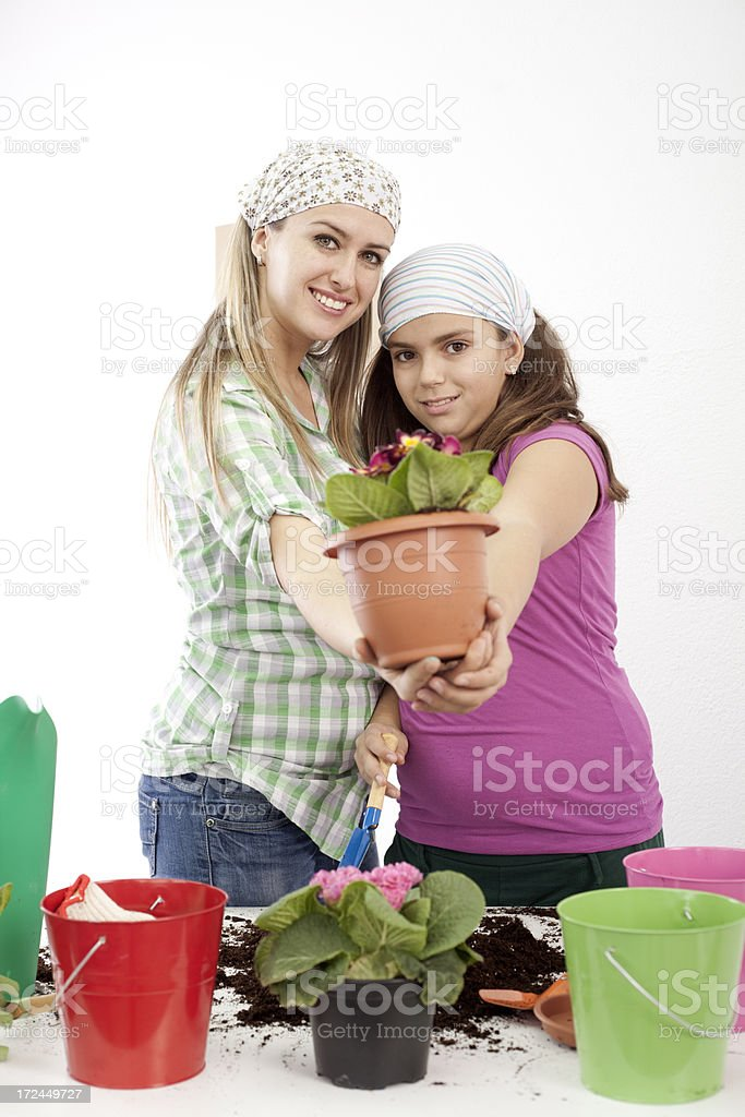 potting flowers together royalty-free stock photo