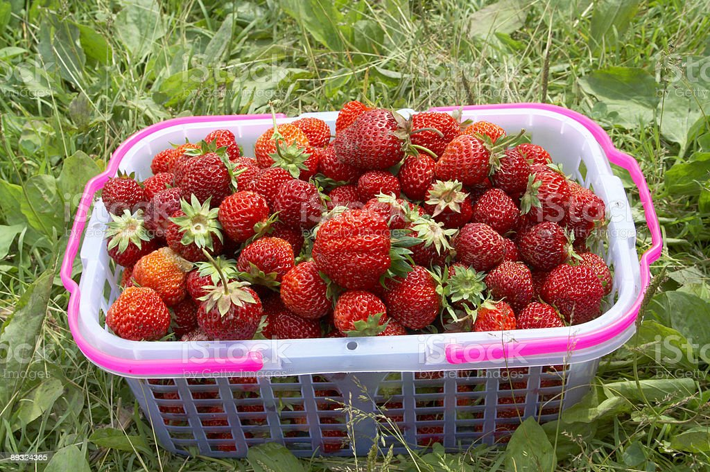 pottle with strawberry stock photo