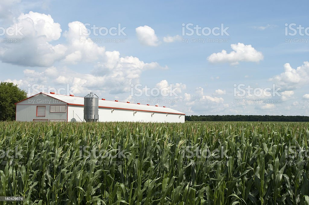 Poultry Barn and Corn Field stock photo