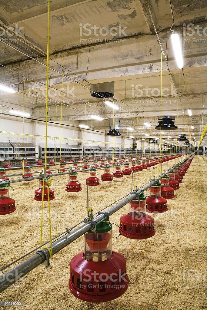 poultry farm royalty-free stock photo