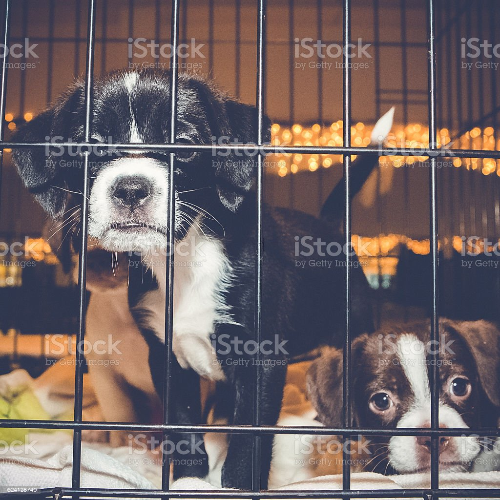 Pound Puppies Confined In Cage stock photo