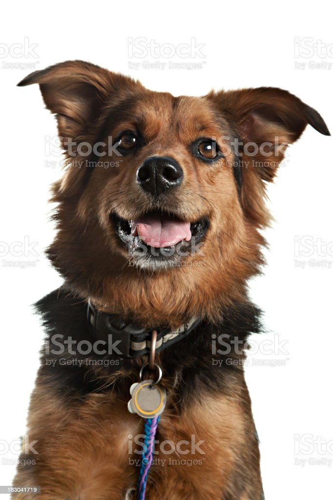 Pound Puppy Mutt Isolated On White stock photo