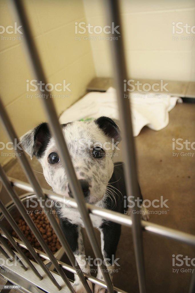 Pound Puppy royalty-free stock photo