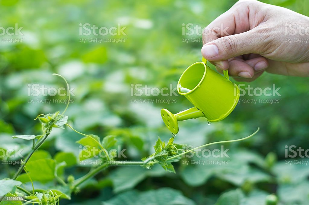 Pouring a young plant from a small watering can, environment stock photo