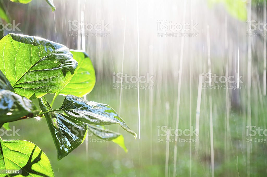 Pouring rain in sunset stock photo
