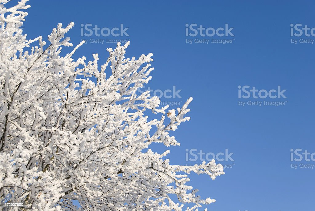 Powdered tree royalty-free stock photo