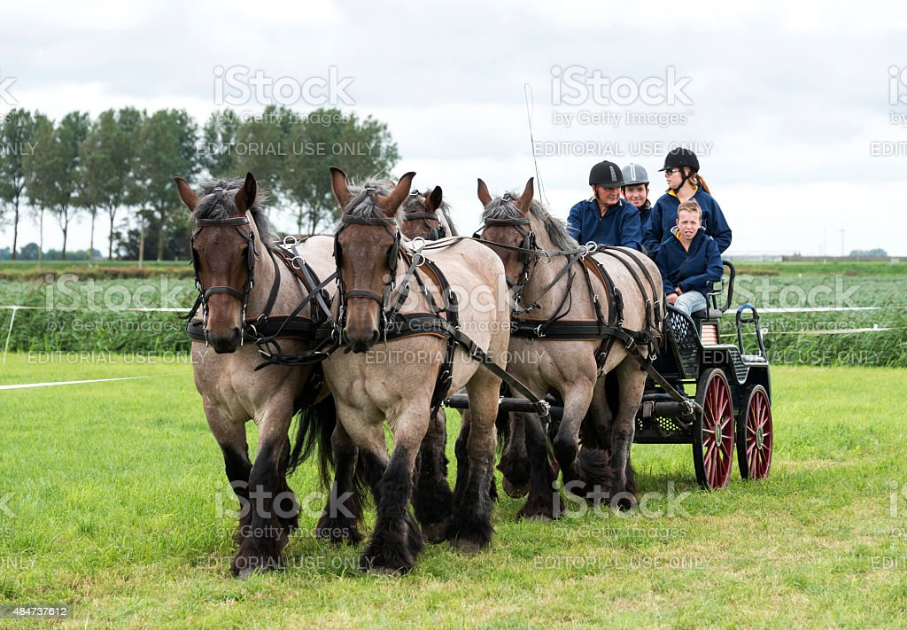 Power horse competition four in hand stock photo