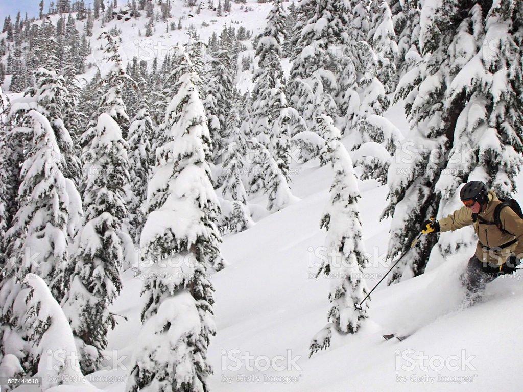 Power Hound. stock photo