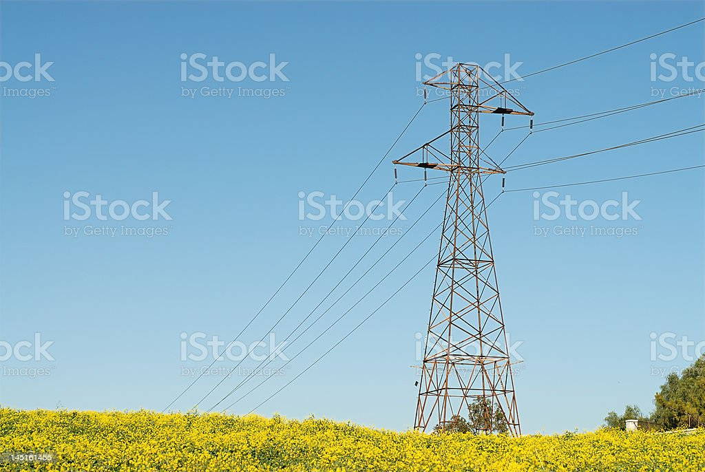 Power line in a meadow royalty-free stock photo