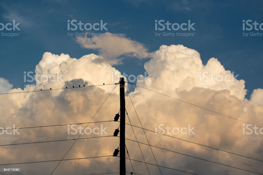 Power Lines and Birds stock photo