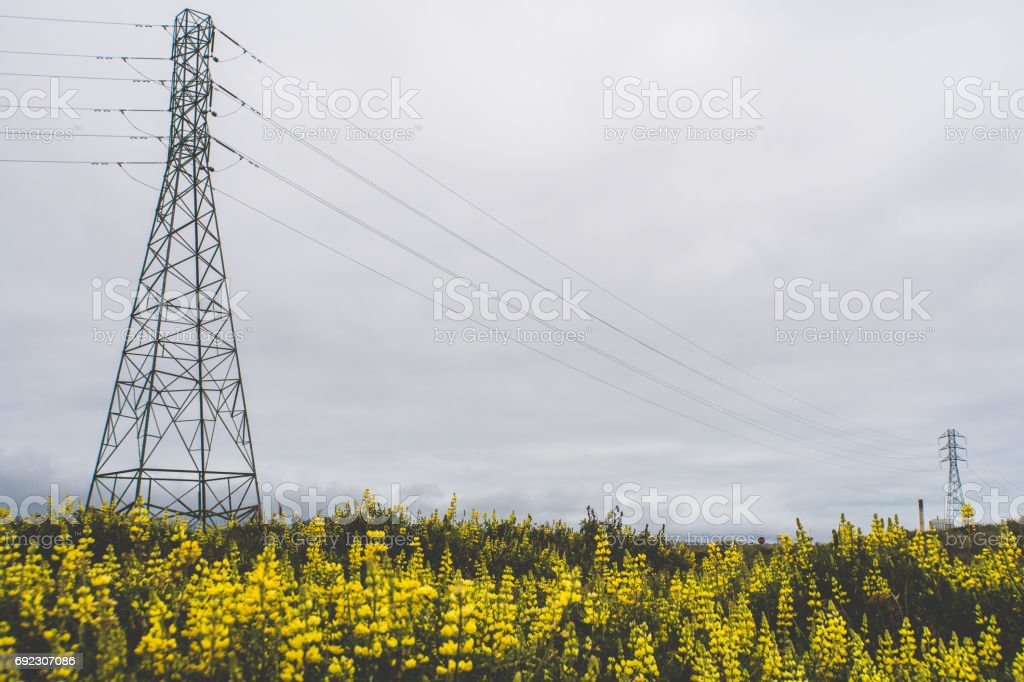 Power lines over flowers with cloudy sky stock photo