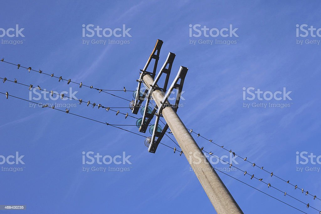 power lines with birds stock photo
