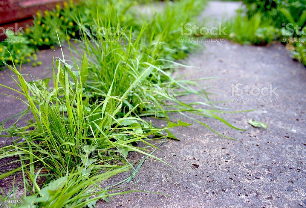 Powerful spring grass stock photo