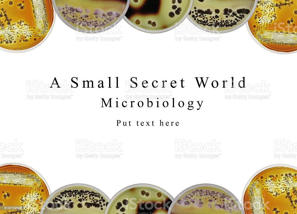 Powerpoint presentation background microbiology, petri dish and stock photo