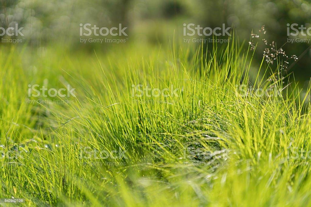 Üppige Gräser stock photo